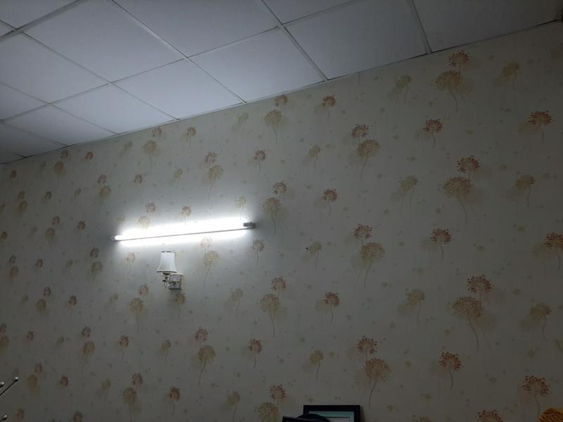 Giấy Dán Tường Phòng Ngủ Phoenix 88311-3 phoenix88311 3